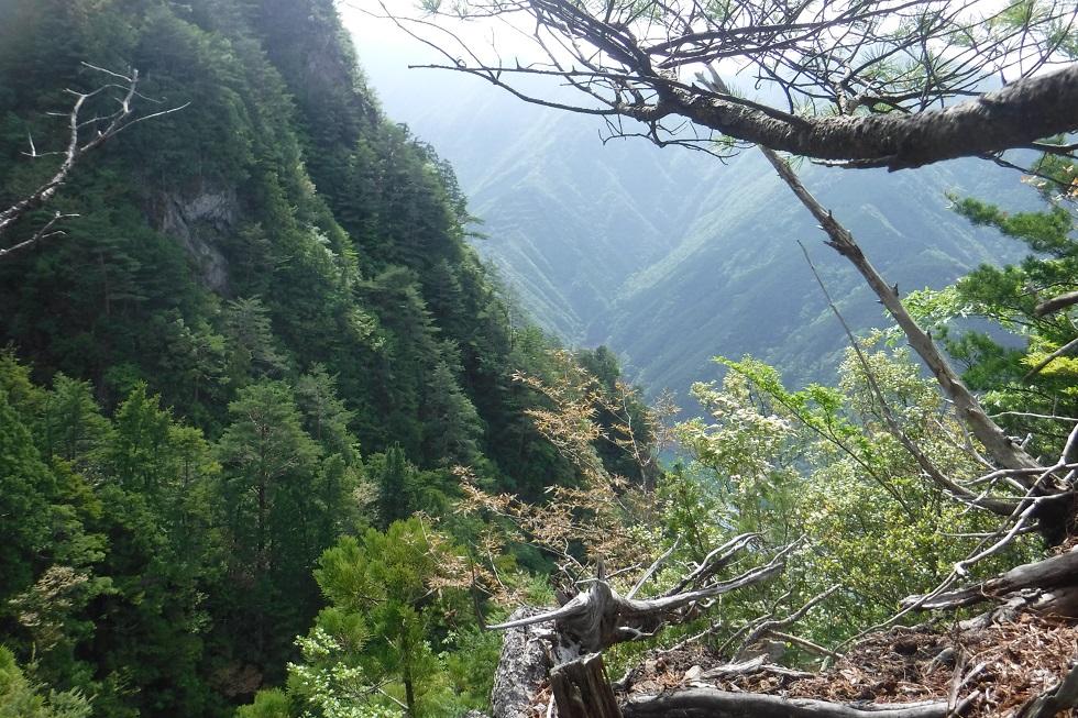 台高 竜口尾根南端~荒谷