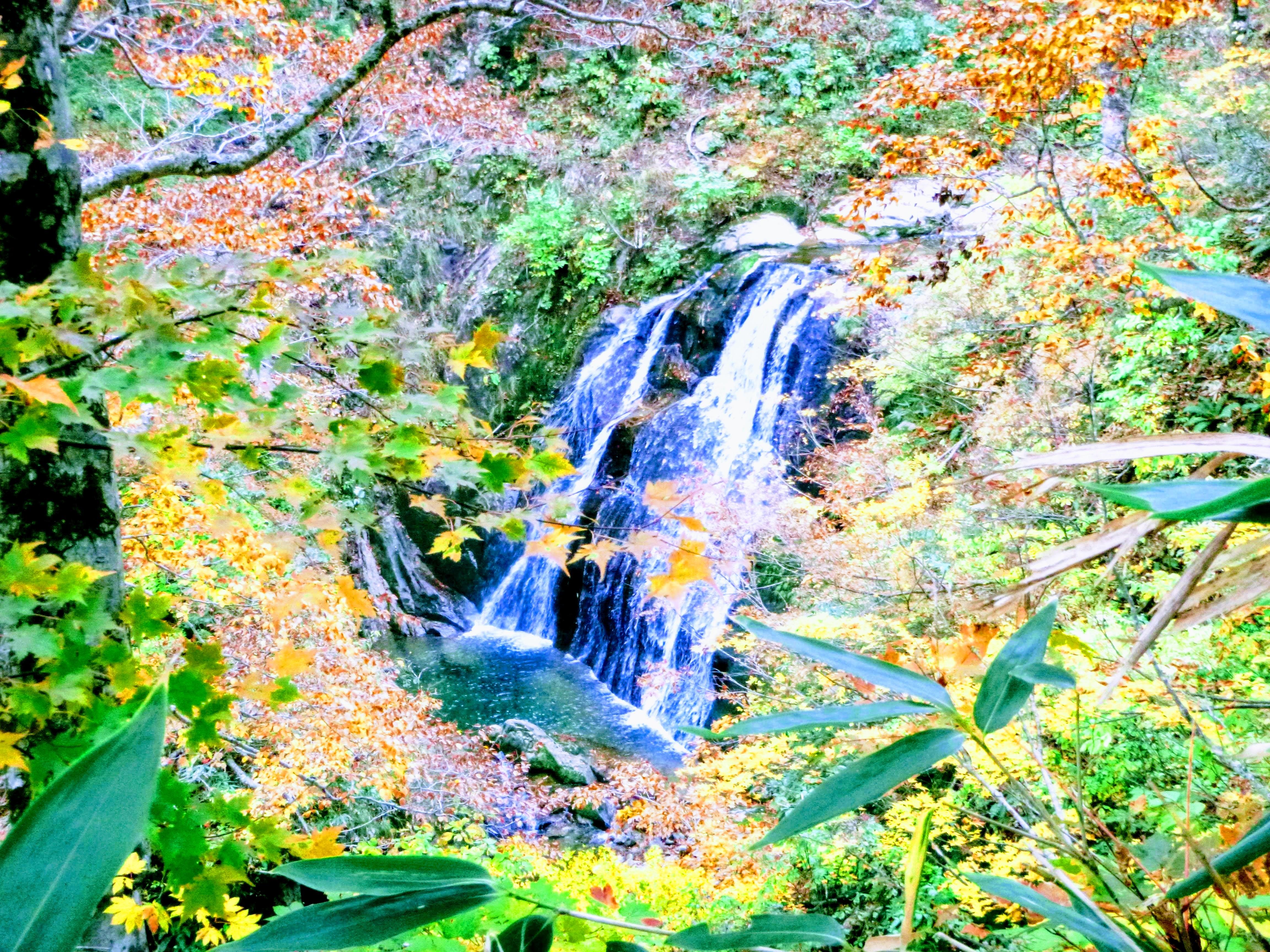 ブナ小屋谷左又, 標高約1370m, 二条滝